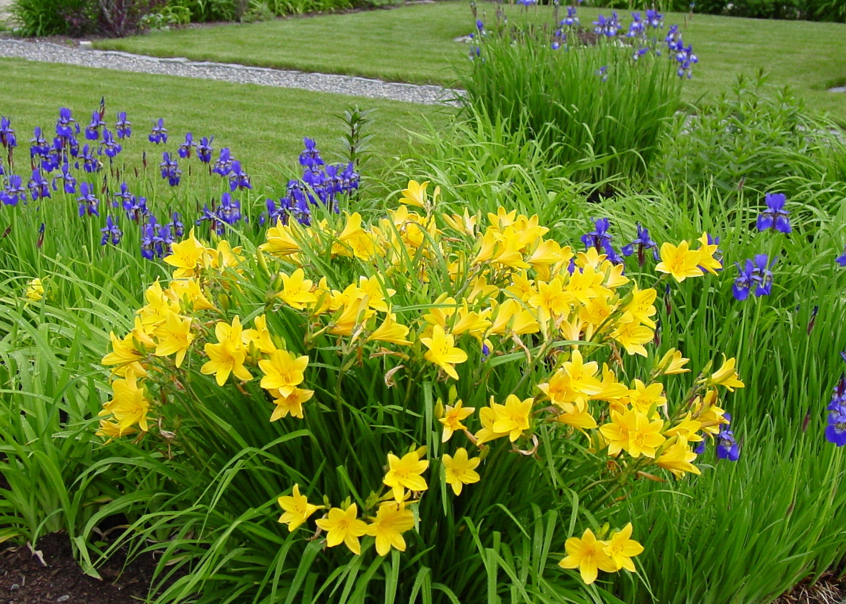 The gallery for List Spring Flowers